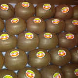 Export Fresh Delicious Kiwi Fruits (25, 27, 30, 33, 36, 39)