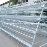Hot Sale Automatic Chicken Cage for Layer Farm