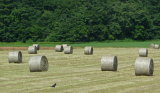 Best Round Bale Wrap Net for Sale 1.23m