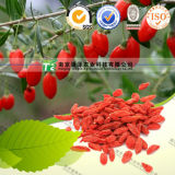 Manufacturer Supply Herb Medicine Barbary Wolfberry Fruit Goji Berry