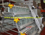 Bateria Cages para Chicken Laying Hens