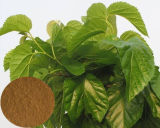 Mulberry Leaf Extract Dnj 4: 1, 5: 1, 10: 1