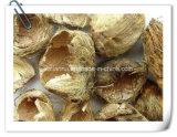 Betel Husk/ Areca Peel/ Pericarpium Arecae Extract Powder