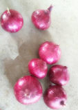 2016 Market Price for Fresh Red Onion on Sale