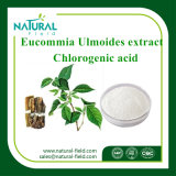 100% Natural Eucommia Ulmoides Extract Powder Chlorogenic Acid Powder Used in Cosmetics