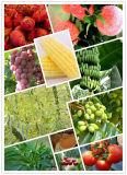 Promote Fertilizer Absorption Brassinolide Br 90%TC 0.2%WP