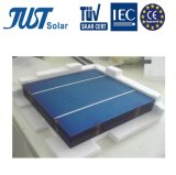 Top Quality 6 Inch Poly Solar Cell with Lowest Price