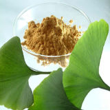 Premium Quality Ginkgo Biloba Extract 24% Flavones 6% Lactones