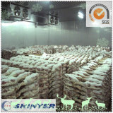 Freezing Cold Storage for Meat Frozen