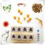 OEM/ODM High Quality Nature Herbal Extract Enhancement Health Care