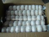 Supplier Garlic Powder Fresh Garlic