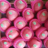From Orchard to Your Hand Top Quality of Fresh FUJI Apple Blush Red