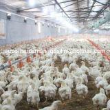 Full Set Equipment for Broiler Poultry House