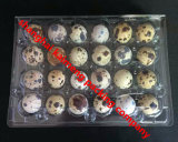 4X6 24units Transparent Plastic Quail Egg Plastic Trays