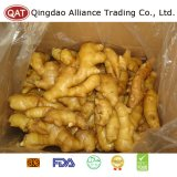 Chinese Fresh Fat Ginger with EU Standard