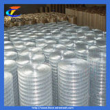304 Stainless Steel Welded Wire Mesh (CT-3)