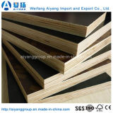 Finger Jointed Poplar Core Black/Brown/Red Film Faced Plywood