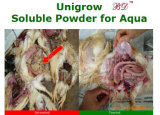 Unigrow Livstock and and Poultry Feed Additive for Disease Resisting and Growth Promoting