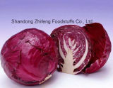 Fresh Cabbage with Purple Skin for Exporting