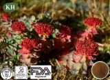 Rhodiola Rosea Extract Is Good for Anti-Aging