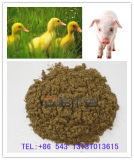 Hot Sale Fish Meal with High Protein for Animal Feed