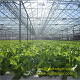 Multi-Span PC Sheet Greenhouse for Hydroponic Cultivation