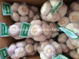 New Season Chinese Fresh Garlic Normal White & Pure White