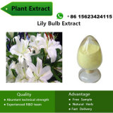 20% Polysaccharide Aid for Falling Asleep Lily Bulb Plant Extract