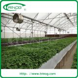 Strawberry Soiless Cultivation hydroponic Solution in greenhouse