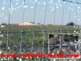 Field Fence/Cattle Fence/Sheep Fence with Lowest Price