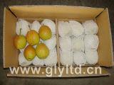 Fresh New Crop Fragrant Pear