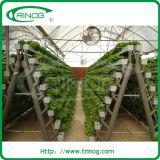 A shelf growing slot for lettuce hydroponics