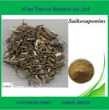 High Quality 10: 1 Chinese Thorowax Root Extract Powder