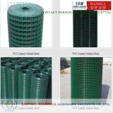 Professional Galvanized Constrution Welded Wire Mesh (ISO 9001)