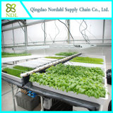 High Tech Hydroponic Growing System for Service