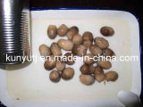 Canned Straw Mushroom with High Quality