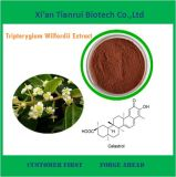 100% Natural Centella Asiatica Extract (tripterygium wilfordii) Extract
