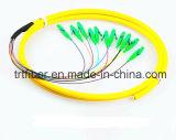 12 Core G652D Singlemode Fiber Pigtail LC/APC