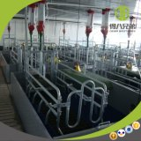 Popular Pig Farrowing Pens China Supplier with Good Quality
