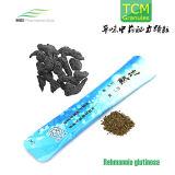 Traditional Chinese Medicine, Rehmannia Glutinosa Granules