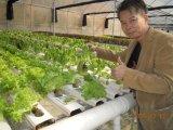 Any Vegetable Used with Unigrow Bio Organic Fertilizer