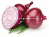 Top Quality Chinese Fresh Red Onion
