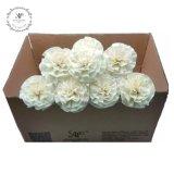Handmade 8PCS/Box Small Wood Carnation Aroma Reed Diffuser Decorative Dry Flowers
