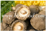Different Sizes Dried Smooth Shiitake Mushroom