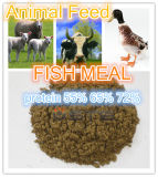 Hot Sale-Fish Meal with High Protein for Animal Feed