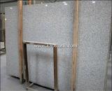 Natural Cheap Shandong White Granite Slab for Flooring