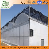 Multi-Span Film Greenhouse with Low Cost Price