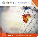 PVC Coated Chain Link Fence Hot Sale