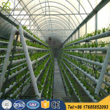 Double Lines Hydroponic Greenhouse Growing System for Vegetable