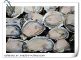 Manufacturer Oyster Shell Extract Powder/Concha Ostreae